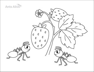 Free ants with strawberries coloring page for kids
