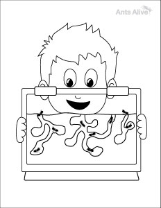 Free ant farm coloring page for kids