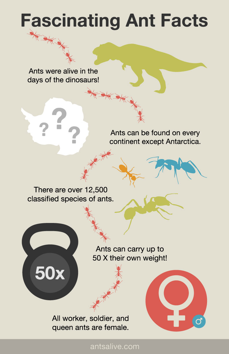 Fascinating Ant Facts Infographic