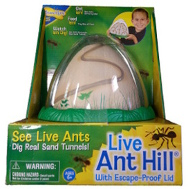 Live Ant Hill observatory product image