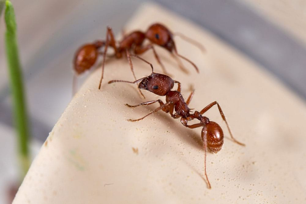 Live Ants Super Supply - $6.98 0