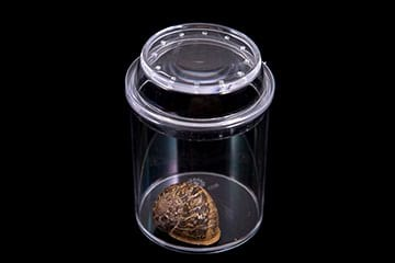 See-Through Bug Jar